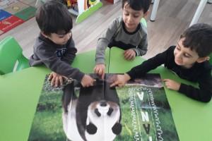 pandayı tanıyoruz