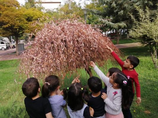 Sonbahar: yaprakları inceliyoruz.